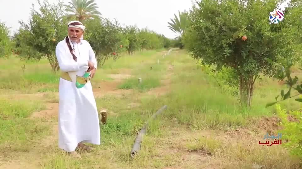 جيران صعدة - اليمن